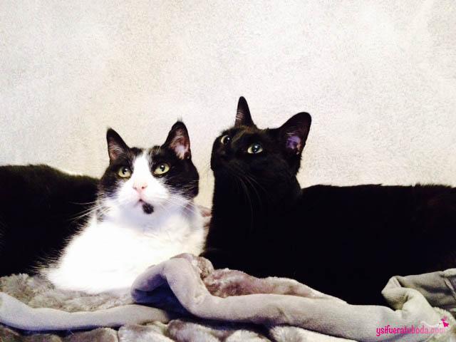 Los gatitos de Ricar y Loli